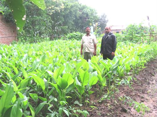 Turmeric Plot Visit at Malaja Village, Chhotaudepur